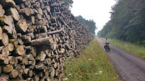 Gigantische boskapwerkzaamhexen die we onderweg tegenkomen