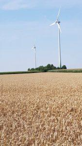 Het Munsterland: heel veel landbouw. Wel mooi!