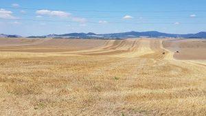 oneindige korenvelden, onderweg naar louny
