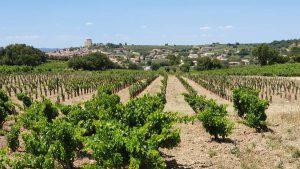 Uitzicht op de wijnvelden van Chateauneuf